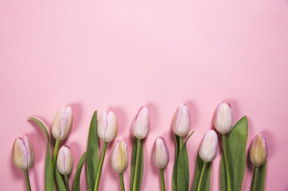 pink-spring-flowers.jpg