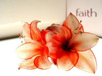 flower_nature_macro_222730_l.jpg