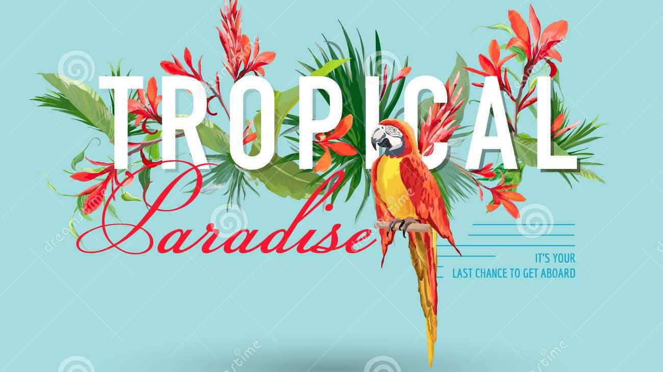 Pájaro-tropical-y-diseño-gráfico-para-la-camiseta-moda-impresión-de-las-flores-85037647