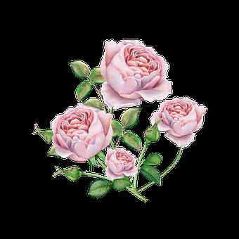 rose-4043467__340