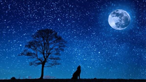 Nuit-dog-647528__340