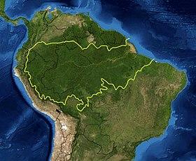 Amazonie_Forêt_Rainforest