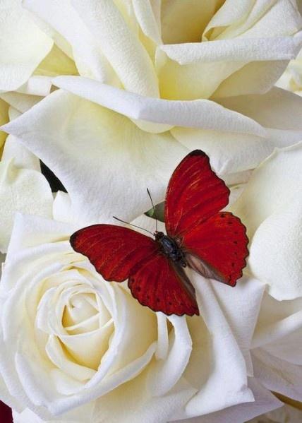 Fleur - Papillon